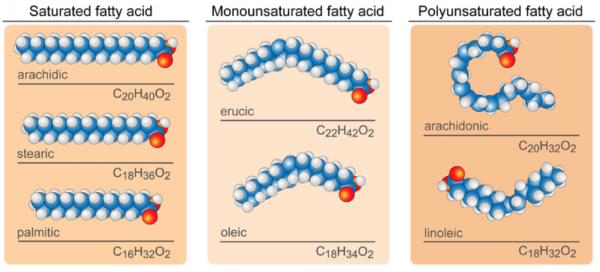 Difference Between Saturated, Monosaturated and Polysaturated Fatty Acids