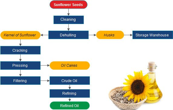 How Sunflower Oil Is Processed